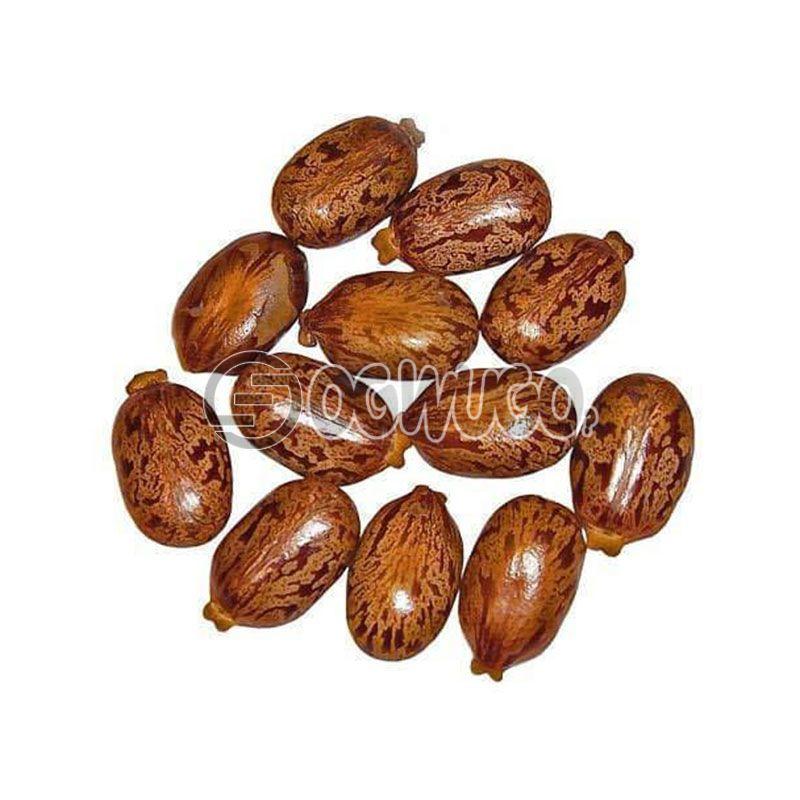 Castor Seed (Ogiri Okpeyi): unable to load image