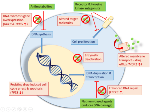 Prostrate Cancer Review Natural Therapeutics