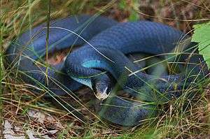 List Of Snakes Of Indiana