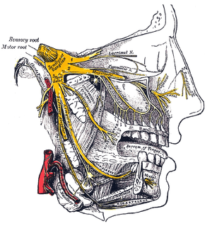 Anatomy of the human nose
