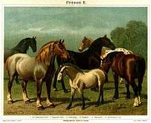 List of horse breeds