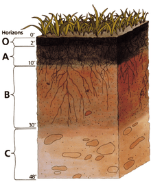 calcification soil forming process
